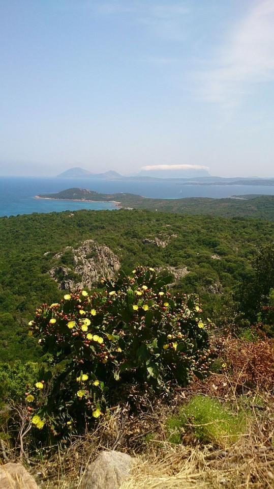 Sardinien La Tavolara
