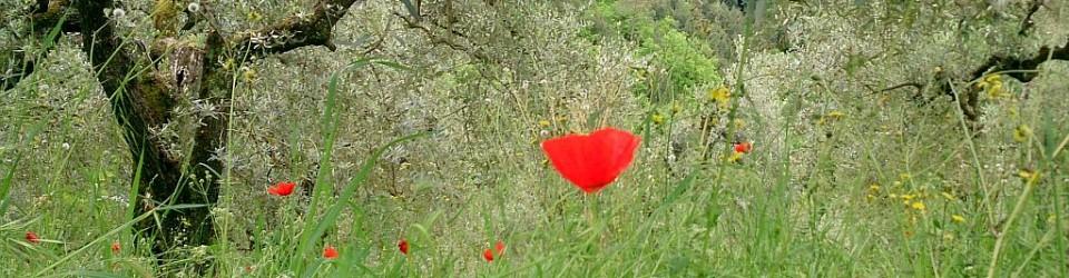 Toscana_slider_mohn