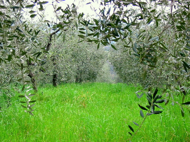 Wanderung Toscana 10