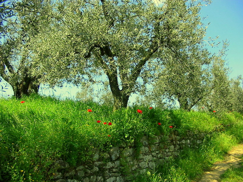 Wanderung Toscana 9